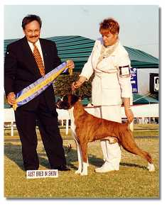 Radin winning Best Aust. Bred in Show