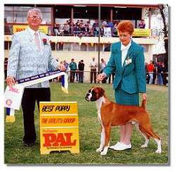 Taratan Rommel Winning Puppy in Group Adelaide Royal