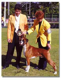 Stolli winning Best in Group - judge Mrs L Brand (NSW)